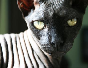 safin, uno de los peques de casa
